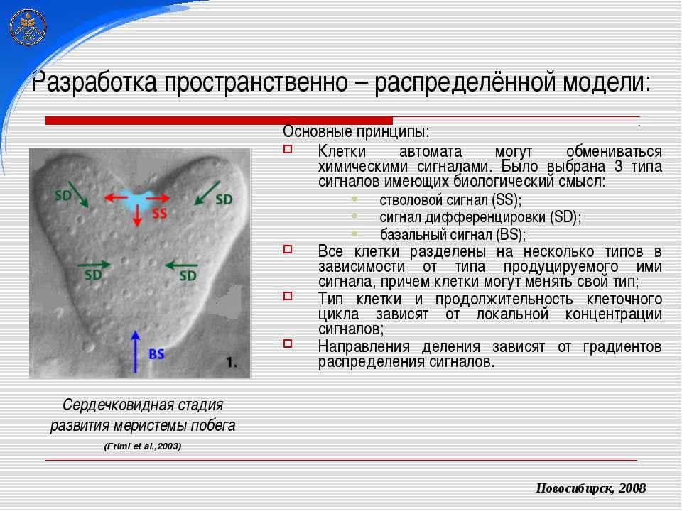 Разработка пространственно – распределённой модели: Основные принципы: Клетки...