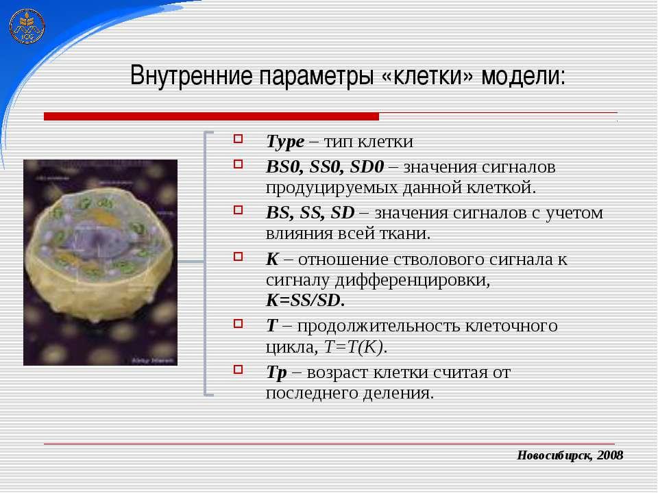 Внутренние параметры «клетки» модели: Type – тип клетки BS0, SS0, SD0 – значе...