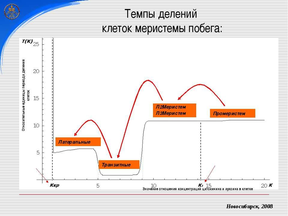 Темпы делений клеток меристемы побега: Новосибирск, 2008 Промеристем Л2Мерист...