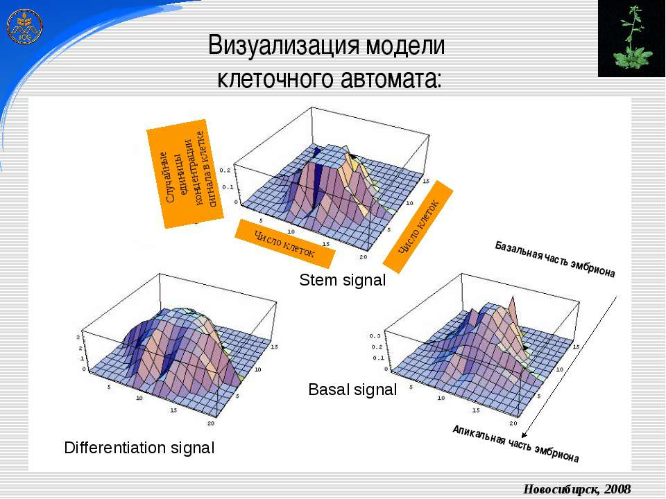 Визуализация модели клеточного автомата: Stem signal Differentiation signal B...