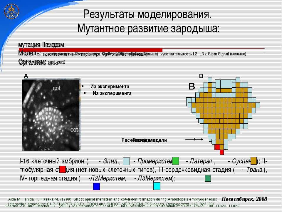 Результаты моделирования. Мутантное развитие зародыша: Sharma V.K. and Fletch...