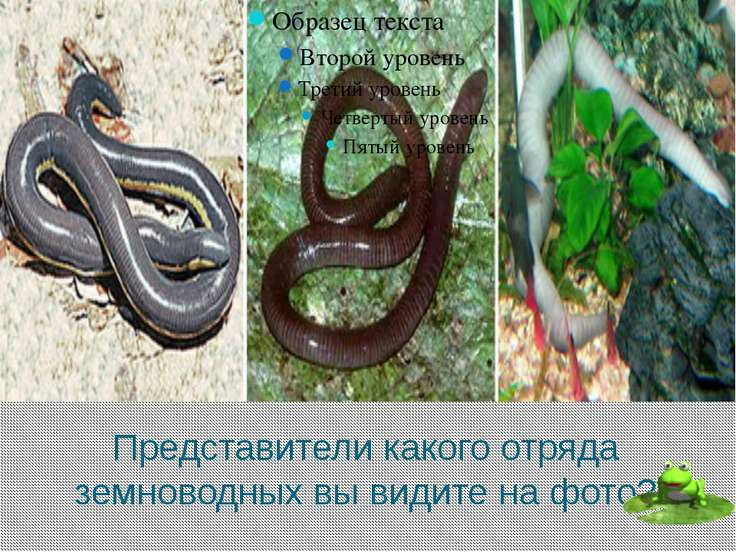 Глаза какого животного могут смотреть в разные стороны, независимо друг от др...