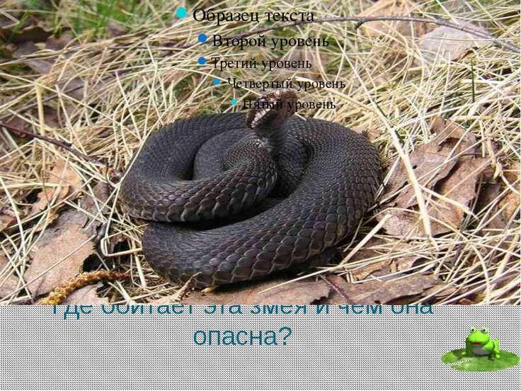 Как называется наука о змеях? Серпентология