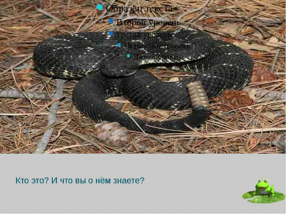 Каким образом гремучие змеи обнаруживают свою жертву? С помощью расположенног...