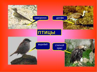 жаворонок степной орел дрофа воробей ПТИЦЫ