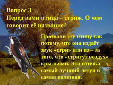 Вопрос 3 Перед вами птица – стриж. О чём говорит её название? Прозвали эту пт...