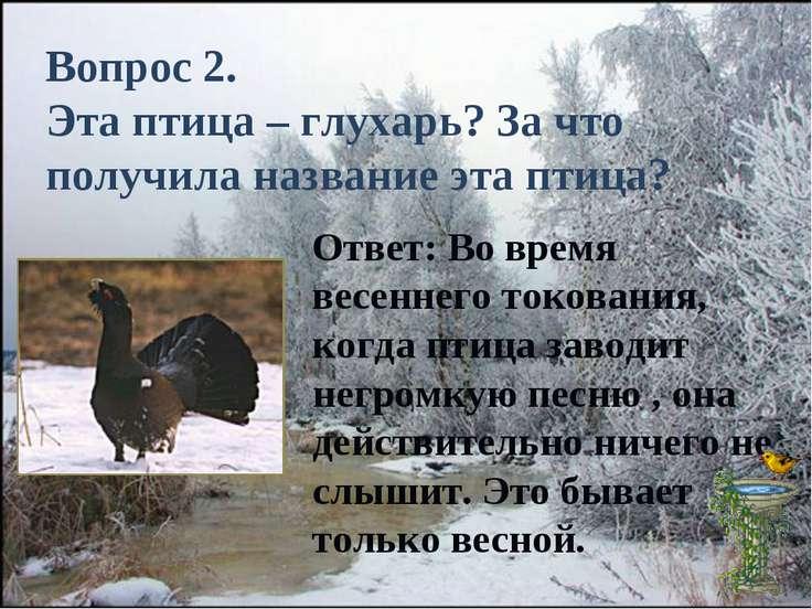 Вопрос 2. Эта птица – глухарь? За что получила название эта птица? Ответ: Во ...