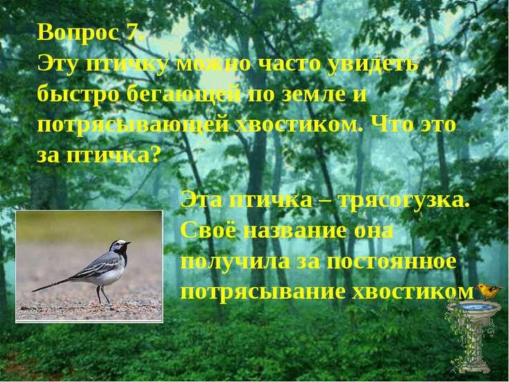 Вопрос 7. Эту птичку можно часто увидеть быстро бегающей по земле и потрясыва...