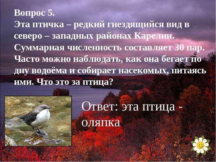 Вопрос 5. Эта птичка – редкий гнездящийся вид в северо – западных районах Кар...