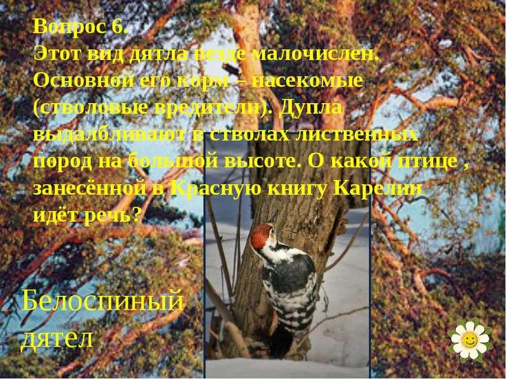 Вопрос 6. Этот вид дятла везде малочислен. Основной его корм – насекомые (ств...