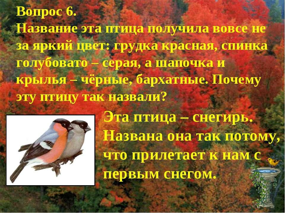 Вопрос 6. Название эта птица получила вовсе не за яркий цвет: грудка красная,...