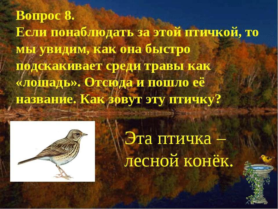 Вопрос 8. Если понаблюдать за этой птичкой, то мы увидим, как она быстро подс...