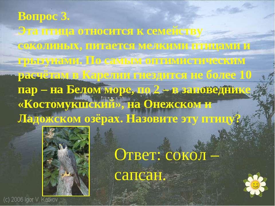 Вопрос 3. Эта птица относится к семейству соколиных, питается мелкими птицами...