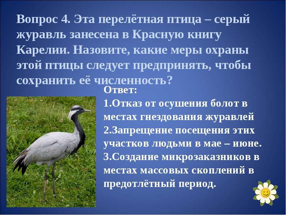 Вопрос 4. Эта перелётная птица – серый журавль занесена в Красную книгу Карел...