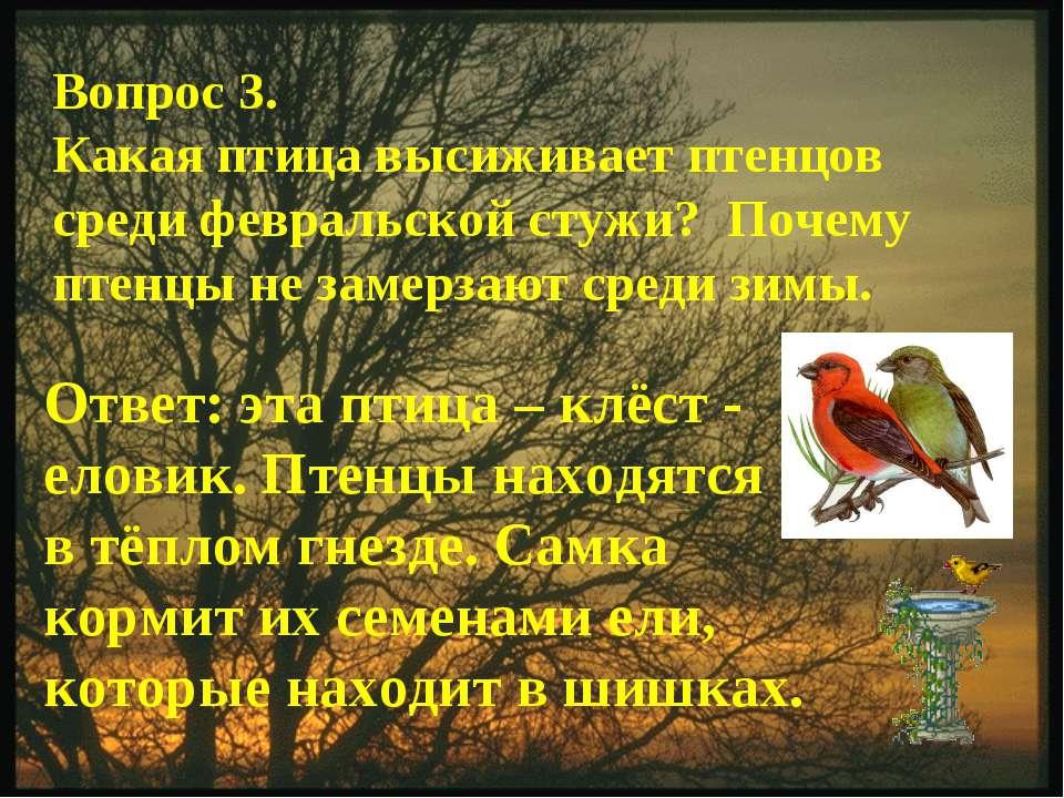 Вопрос 3. Какая птица высиживает птенцов среди февральской стужи? Почему птен...