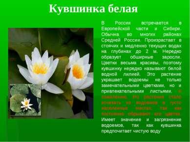 Кувшинка белая В России встречается в Европейской части и Сибири. Обычна во м...