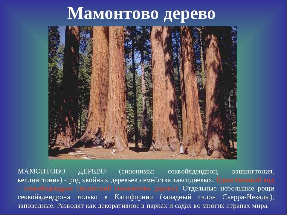 Мамонтово дерево МАМОНТОВО ДЕРЕВО (синонимы: секвойядендрон, вашингтония, вел...