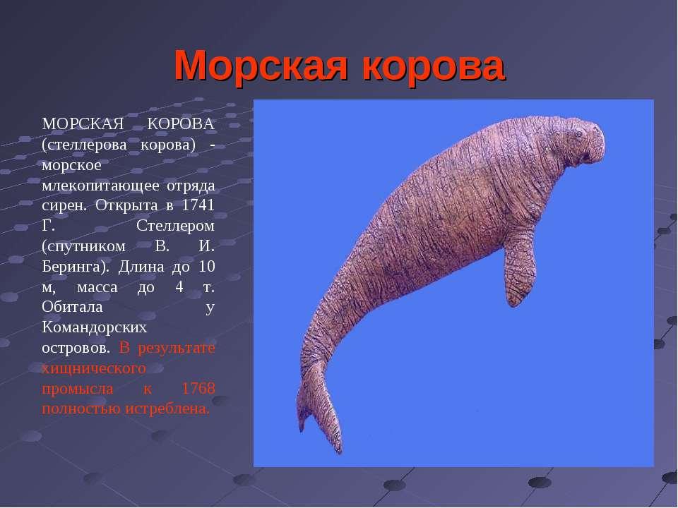 Морская корова МОРСКАЯ КОРОВА (стеллерова корова) - морское млекопитающее отр...