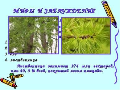 23 Какое дерево самое распространенное на территории бывшего Советского Союза...