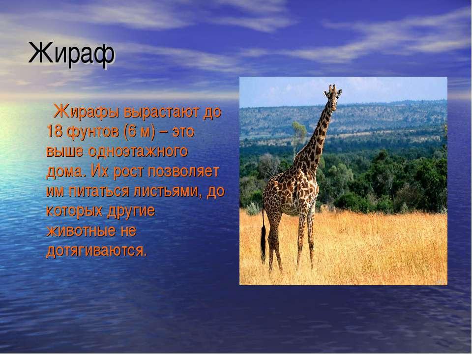 Жираф Жирафы вырастают до 18 фунтов (6 м) – это выше одноэтажного дома. Их ро...