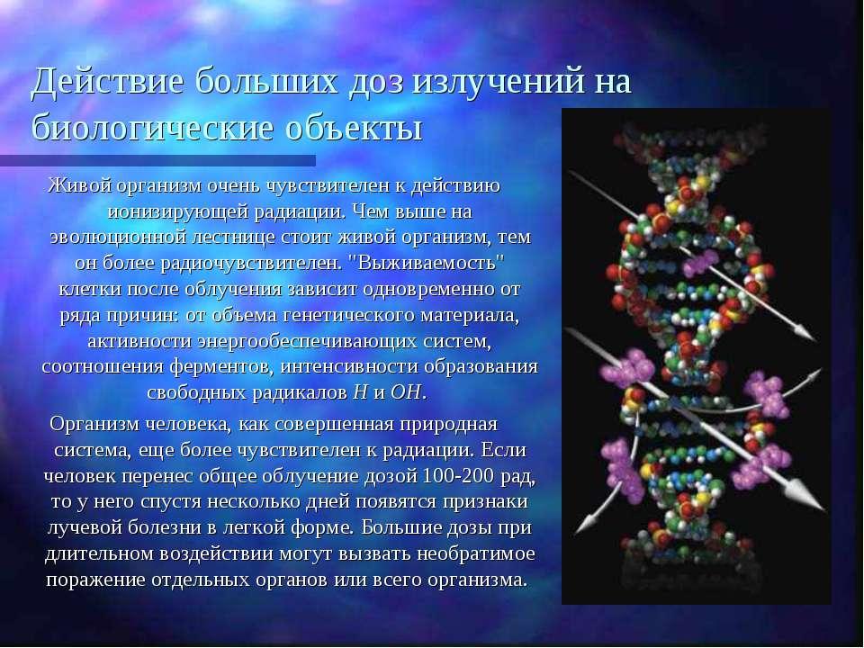 Действие больших доз излучений на биологические объекты Живой организм очень ...