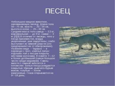ПЕСЕЦ Небольшое хищное животное, напоминающее лисицу. Длина тела 50—75 см, хв...