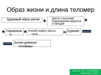 Образ жизни и длина теломер Здоровый образ жизни Ligi Paul, 2011 J.of Nutriti...