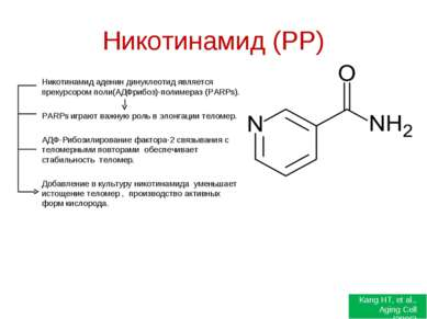 Никотинамид (РР) Никотинамид аденин динуклеотид является прекурсором поли(АДФ...