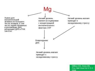 Mg Нужен для каталитической активности большого числа энзимов, в том числе за...