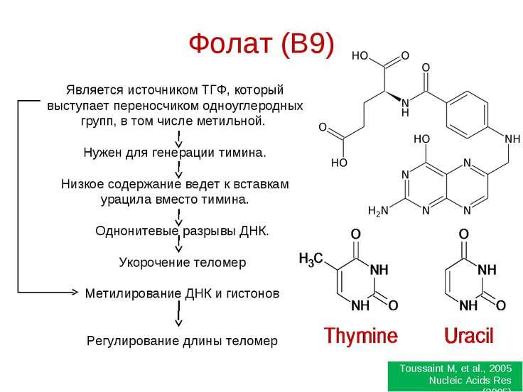 Фолат (B9) Является источником ТГФ, который выступает переносчиком одноуглеро...