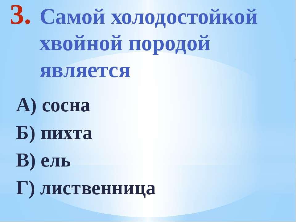 Самой холодостойкой хвойной породой является А) сосна Б) пихта В) ель Г) лист...