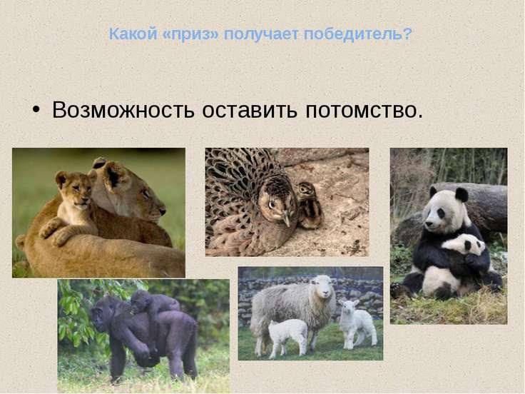 http://www.e-drofa.ru/materials/bio9/objects/_borba_za_s_00000173/brachnyj_tu...