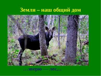 Земля – наш общий дом …зверю — лес,...