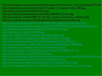 http://mediasubs.ru/group/uploads/mi/mir-iskusstva-tvorchestva-i-krasotyi/ima...