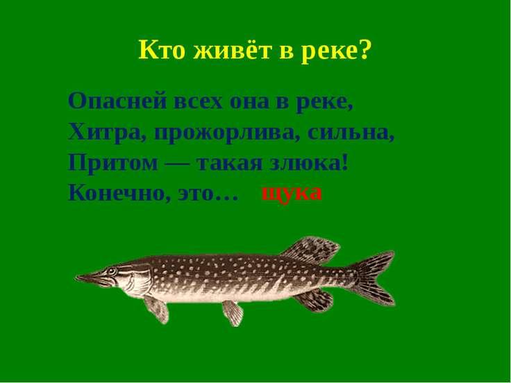 Кто живёт в реке? Опасней всех она в реке, Хитра, прожорлива, сильна, Притом ...