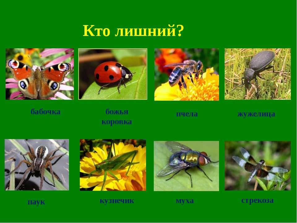 Кто лишний? бабочка божья коровка пчела жужелица паук кузнечик муха стрекоза