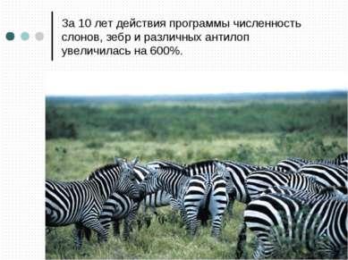 За 10 лет действия программы численность слонов, зебр и различных антилоп уве...