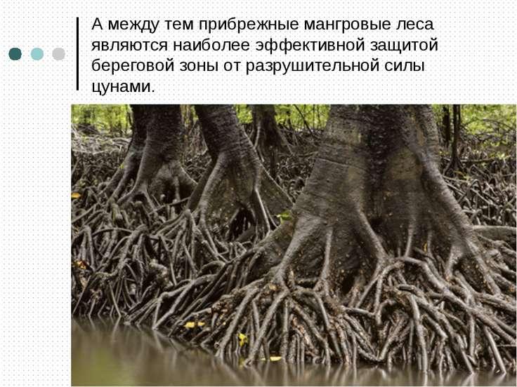 А между тем прибрежные мангровые леса являются наиболее эффективной защитой б...