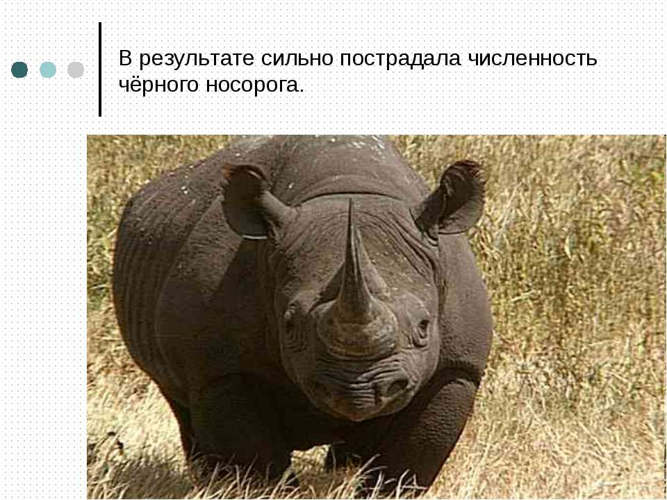 В результате сильно пострадала численность чёрного носорога.