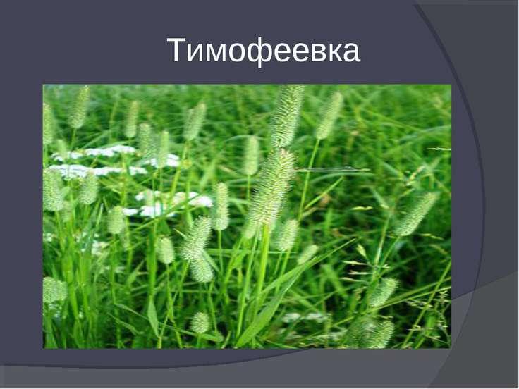 Тимофеевка