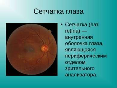 Сетчатка глаза Сетчатка (лат. retína) — внутренняя оболочка глаза, являющаяся...