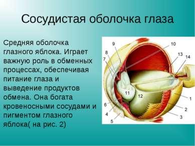 Сосудистая оболочка глаза Средняя оболочка глазного яблока. Играет важную рол...