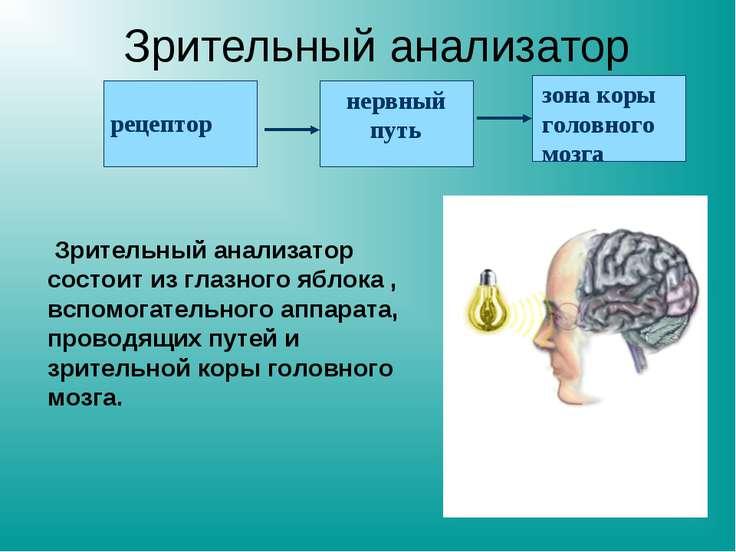 Презентация на тему зрительный анализатор