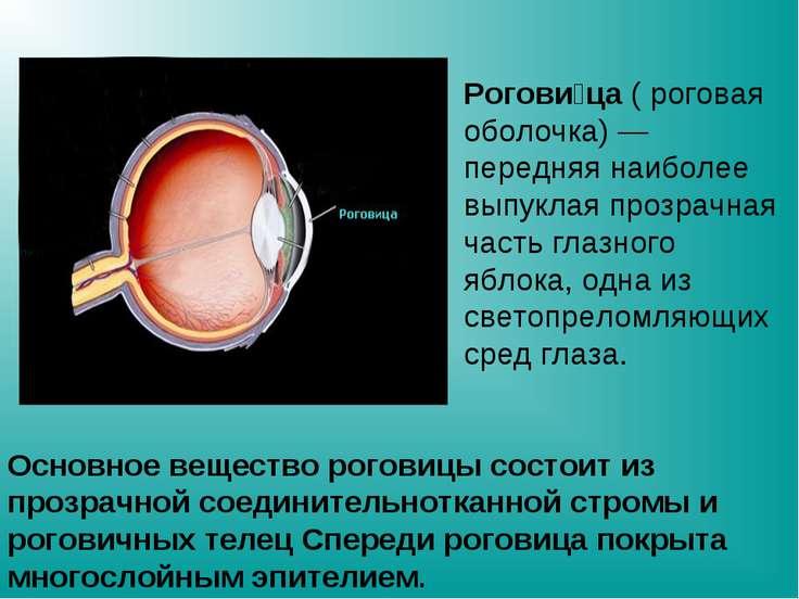 Основное вещество роговицы состоит из прозрачной соединительнотканной стромы ...