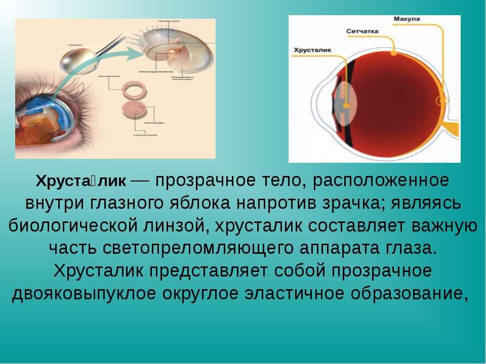 Хруста лик — прозрачное тело, расположенное внутри глазного яблока напротив з...