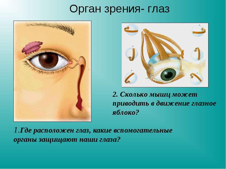 1.Где расположен глаз, какие вспомогательные органы защищают наши глаза? 2. С...