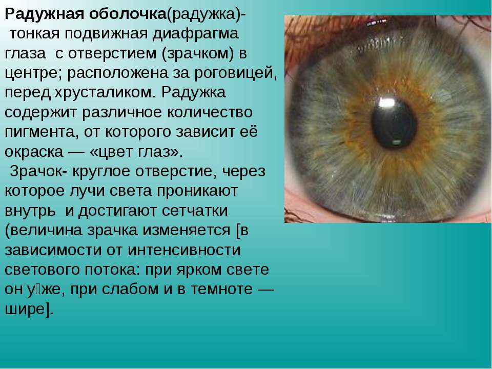 Цвета радужной оболочки глаза