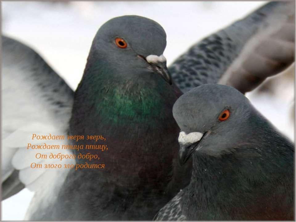 . Рождает зверя зверь, Рождает птица птицу, От доброго добро, От злого зло ро...