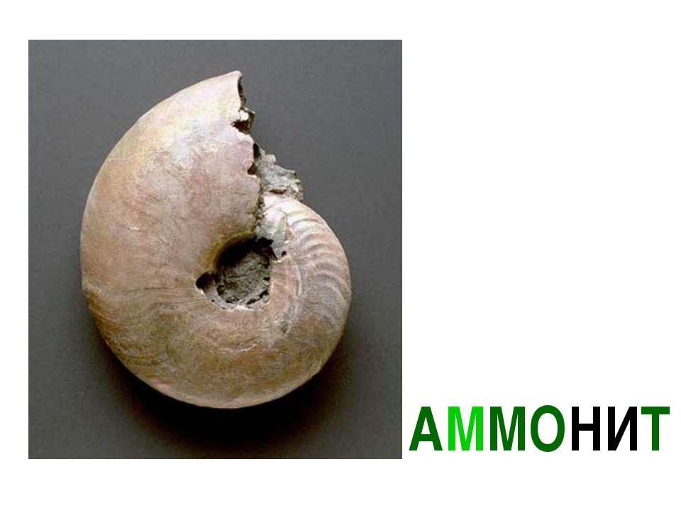 АММОНИТ