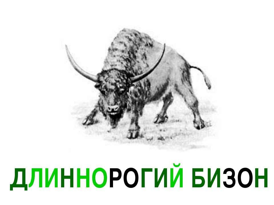 ДЛИННОРОГИЙ БИЗОН